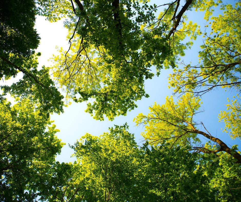 Drzewa – biznes na dziś
