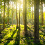 Drzewa – biznes przyszłości
